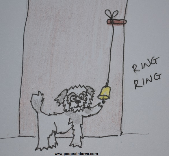 Dog Poop Training